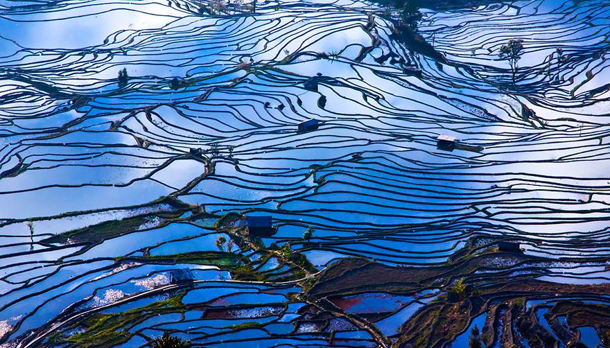 Рисовое поле. Фото № 14