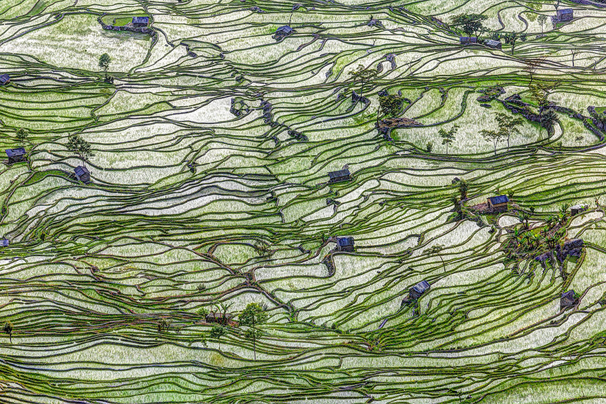 Рисовое поле. Фото № 15