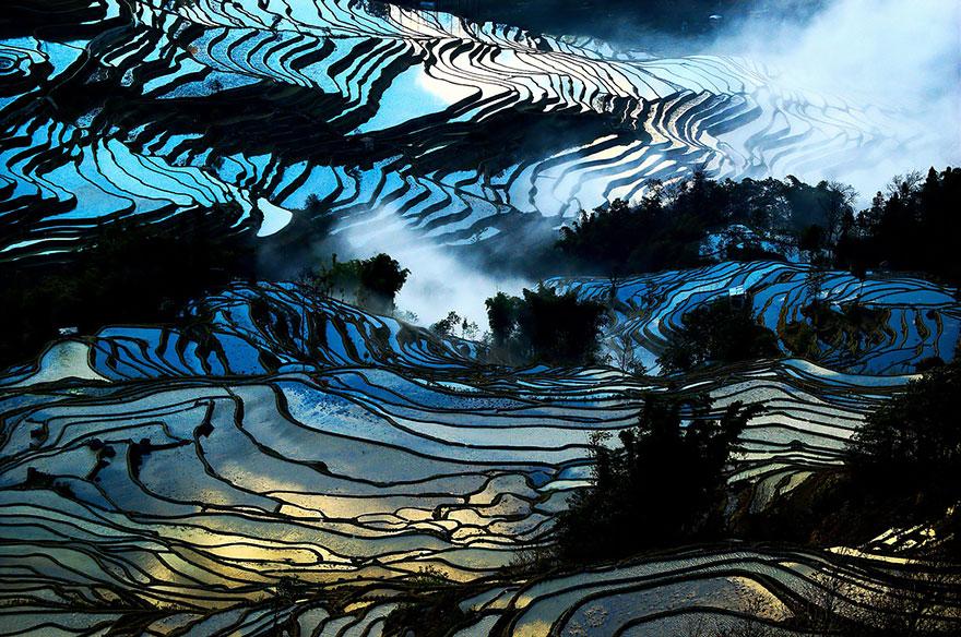 Рисовое поле. Фото № 16