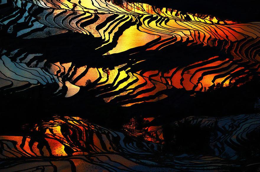 Рисовое поле. Фото № 17