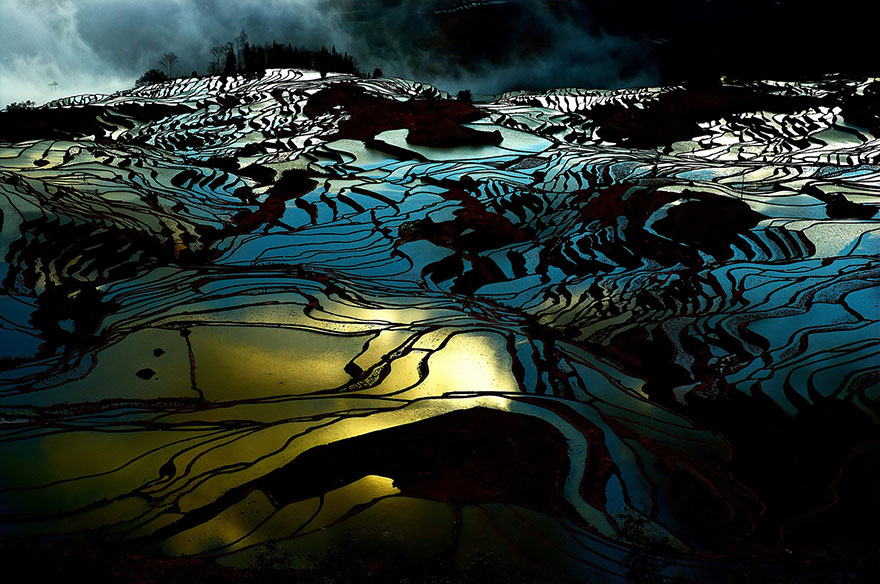 Рисовое поле. Фото № 18