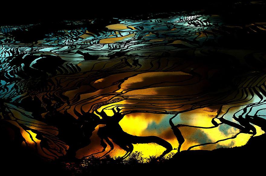 Рисовое поле. Фото № 19