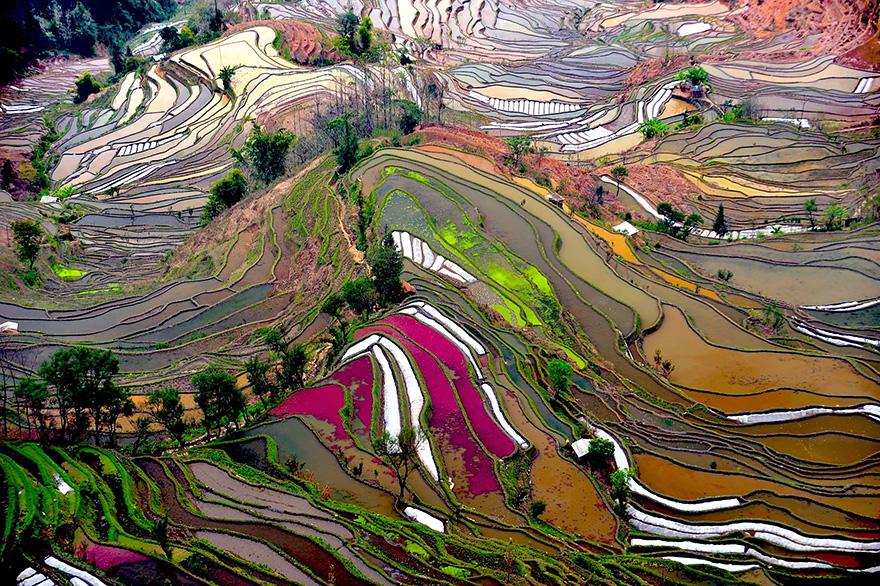 Рисовое поле. Фото № 2