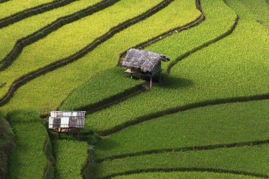 Рисовое поле. Фото № 20