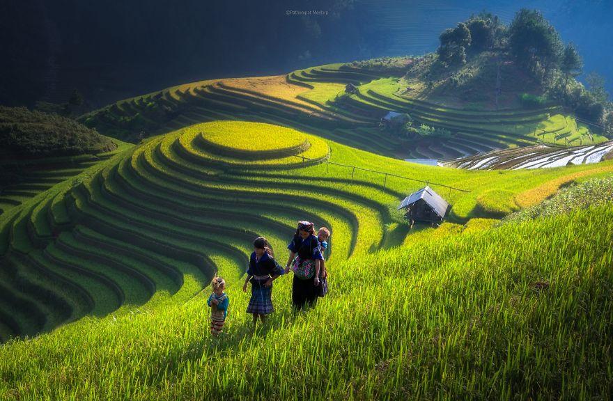 Рисовое поле. Фото № 21