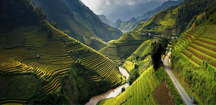 Рисовое поле. Фото № 3