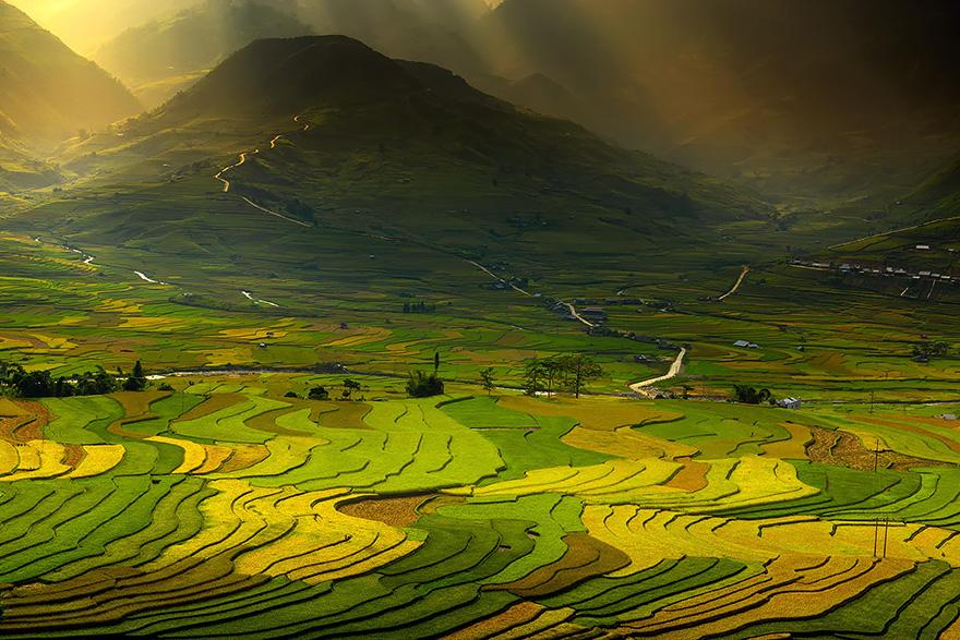 Рисовое поле. Фото № 5