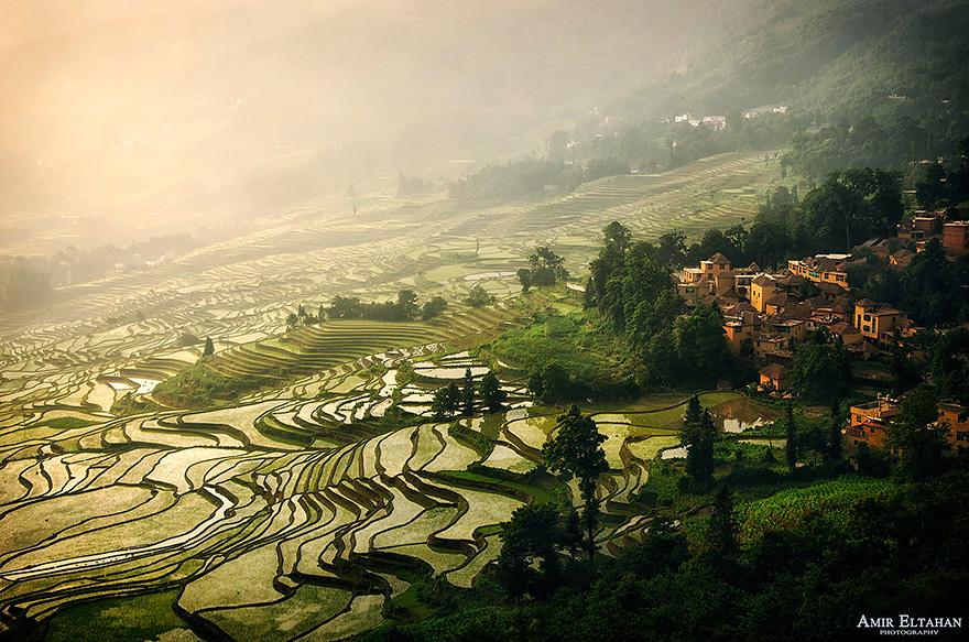 Рисовое поле. Фото № 8