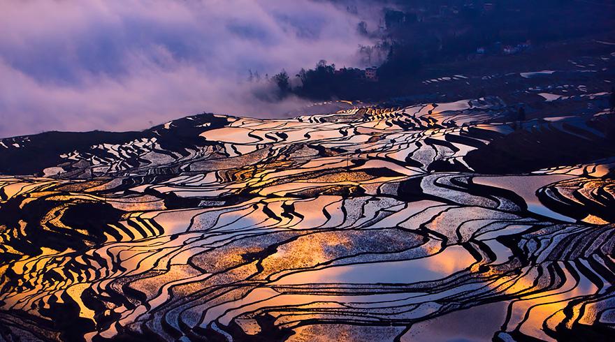 Рисовое поле. Фото № 9