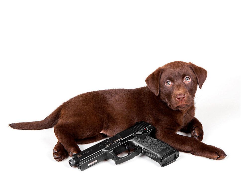 Щенки с оружием. Календарь. Фото № 12