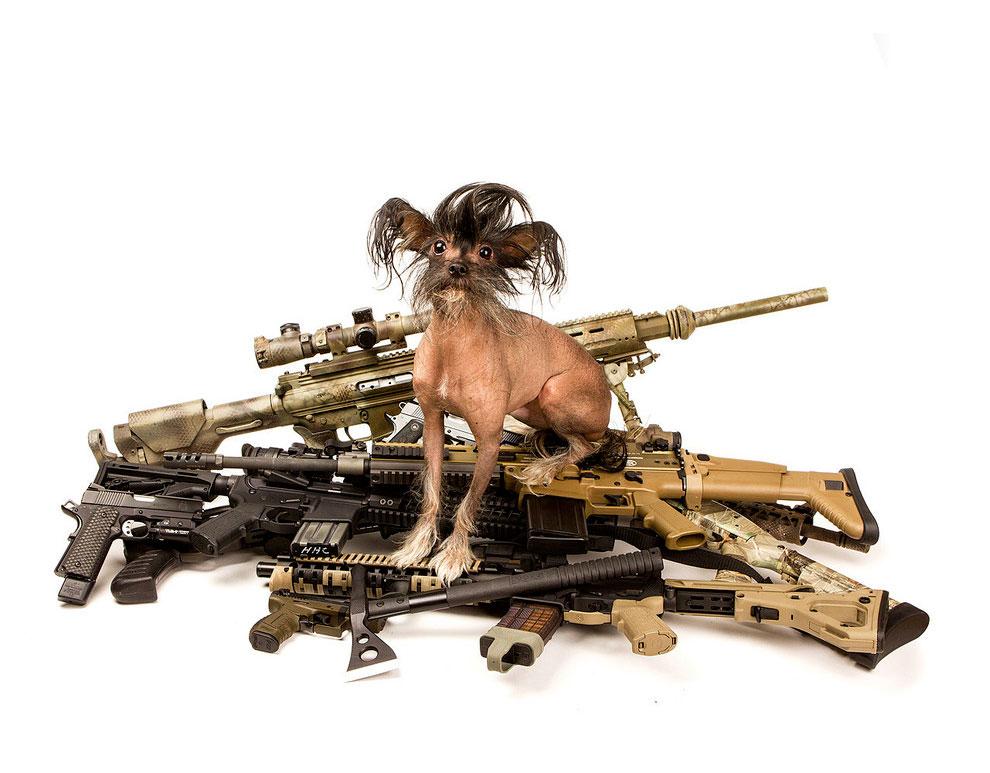 Щенки с оружием. Календарь. Фото № 14