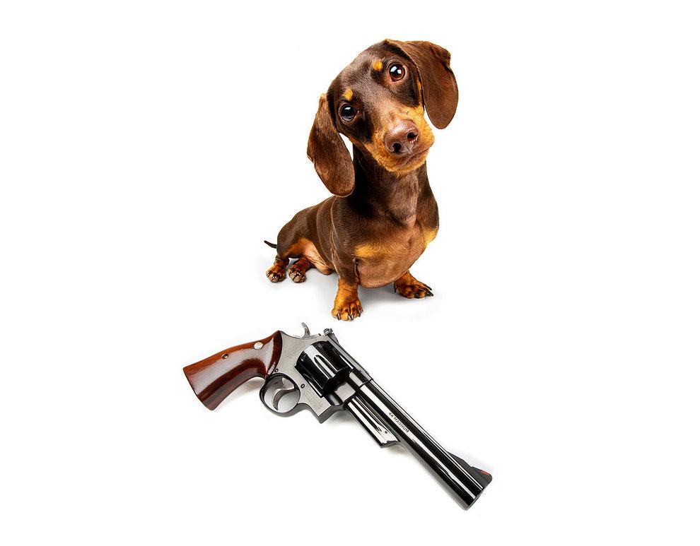 Щенки с оружием. Календарь. Фото № 3