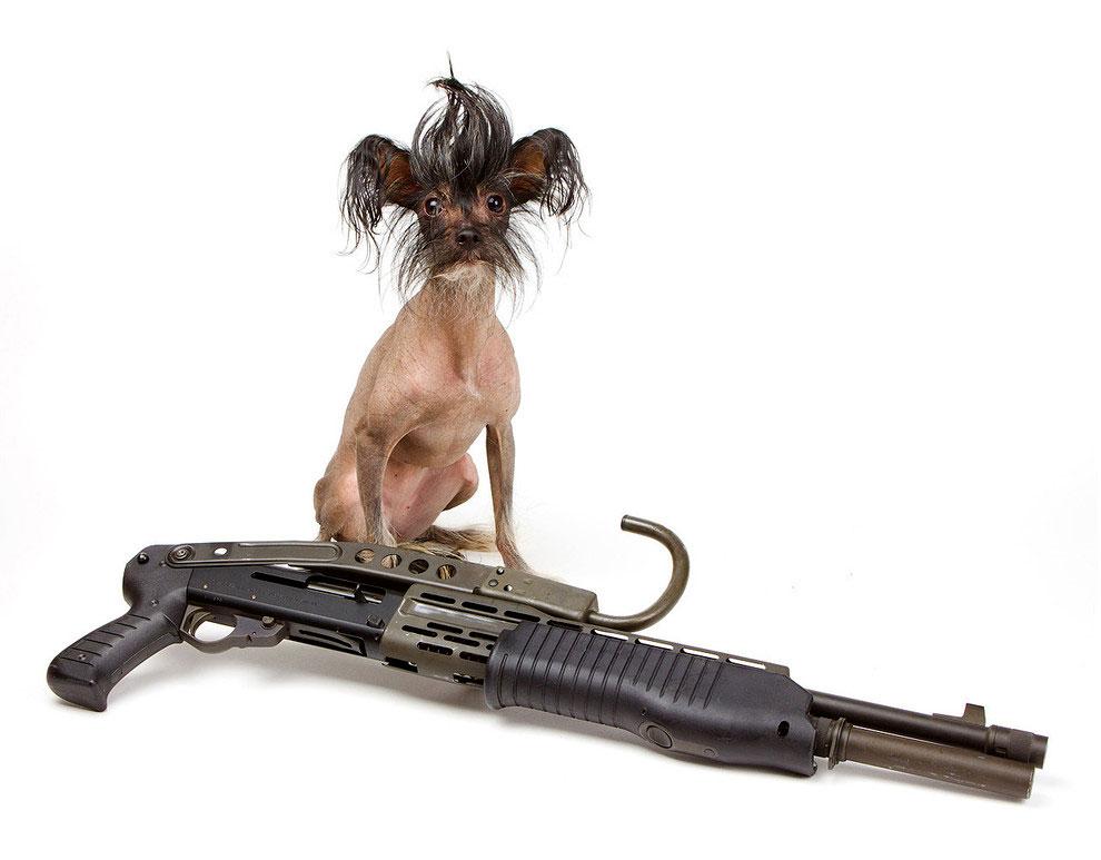 Щенки с оружием. Календарь. Фото № 5