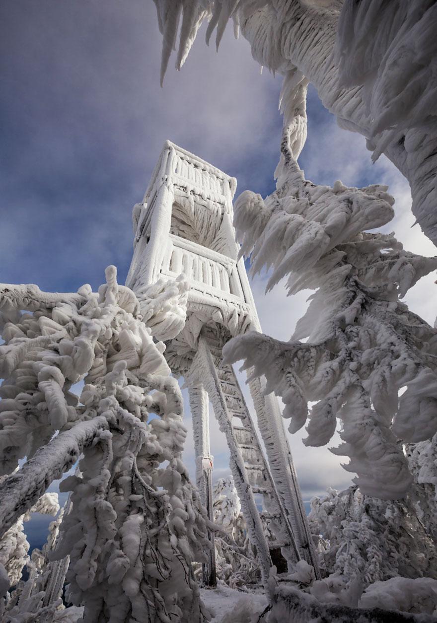 Царство льда. Обледеневшие деревья и природа. Фото № 3