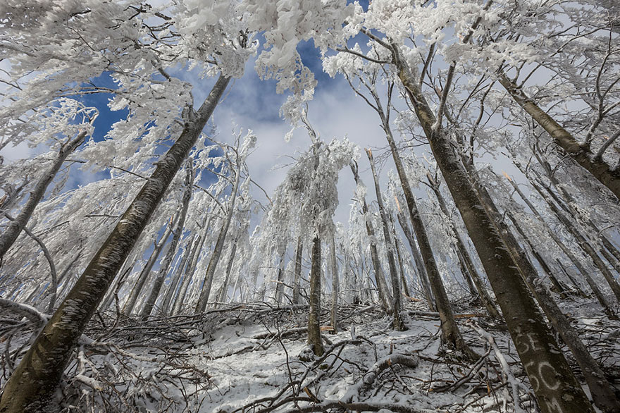 Царство льда. Обледеневшие деревья и природа. Фото № 5