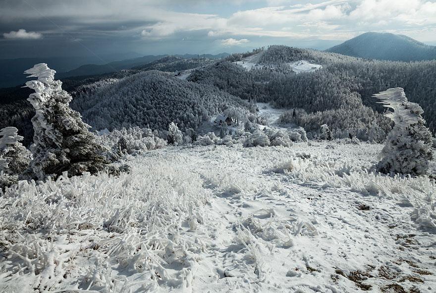 Царство льда. Обледеневшие деревья и природа. Фото № 6