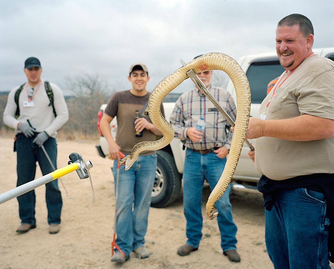 фото змей. гремучие змеи. Фото № 3