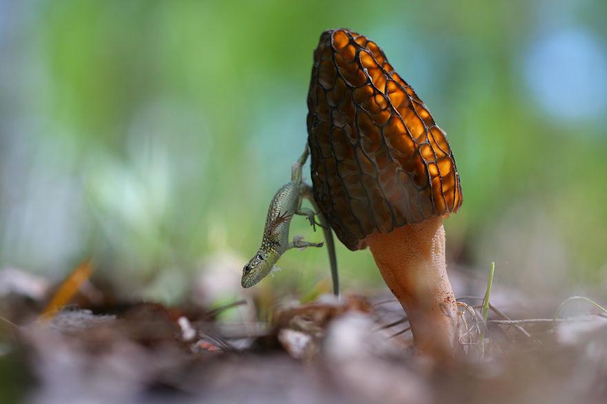 Макрофотографии насекомых от Владимира Трунова. Фото № 12