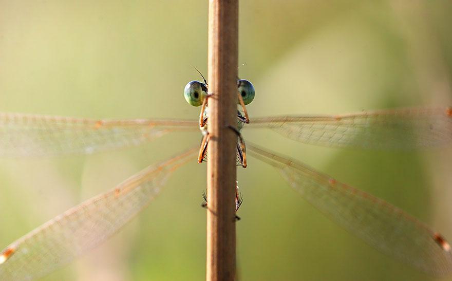 Макрофотографии насекомых от Владимира Трунова. Фото № 13