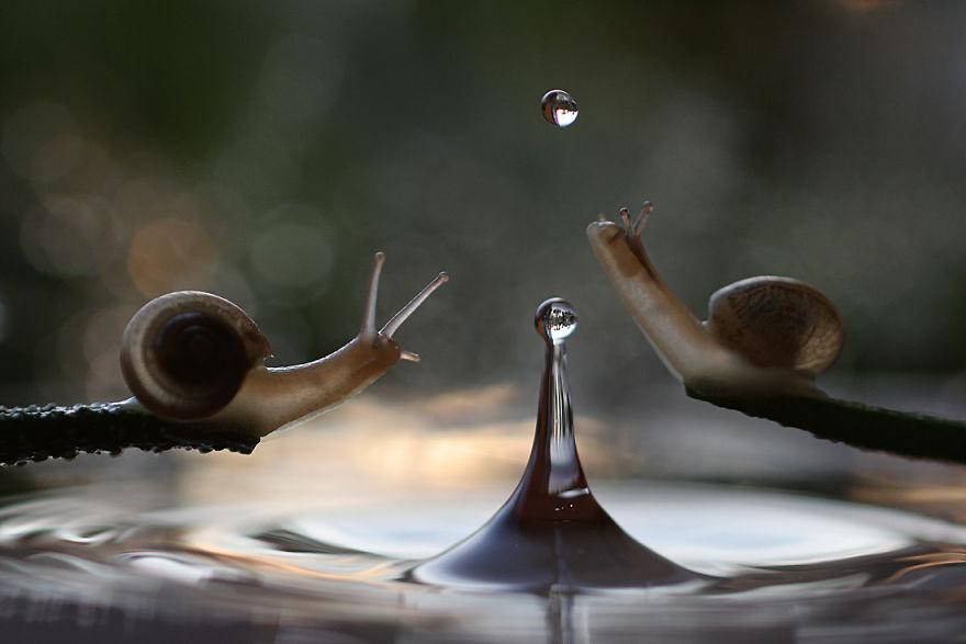 Макрофотографии насекомых от Владимира Трунова. Фото № 14