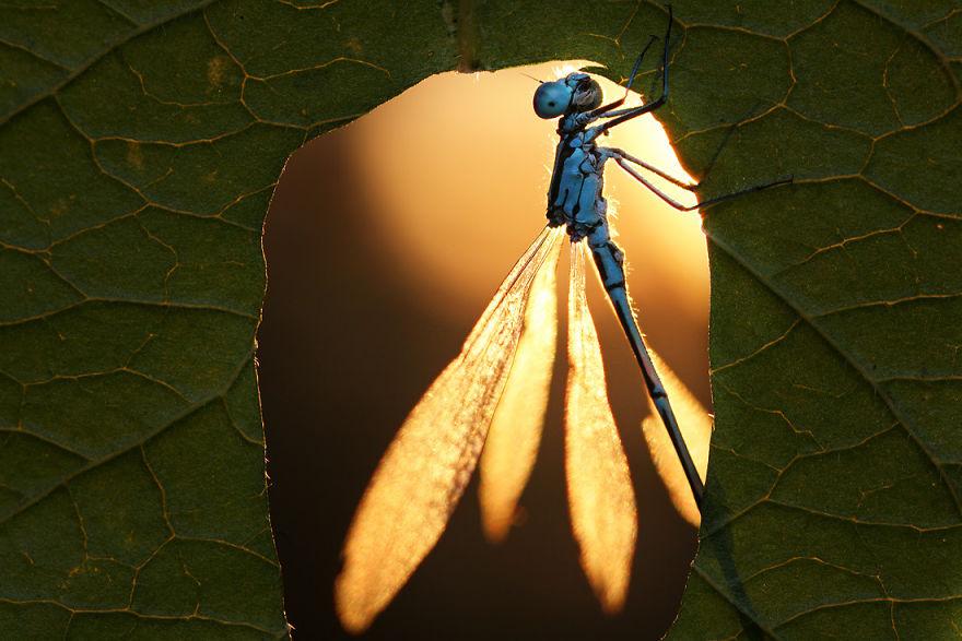 Макрофотографии насекомых от Владимира Трунова. Фото № 16
