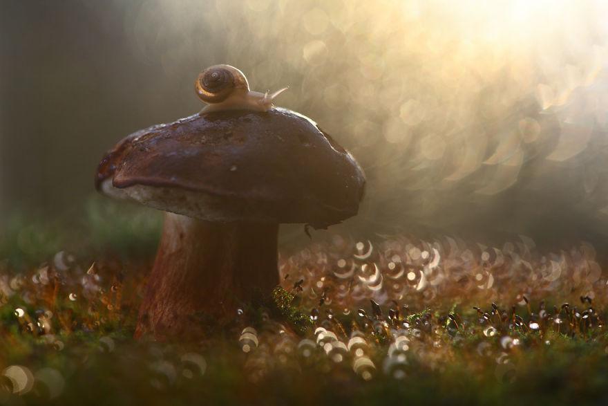 Макрофотографии насекомых от Владимира Трунова. Фото № 18