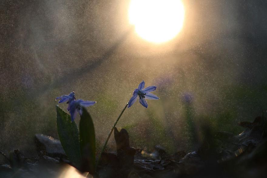 Макрофотографии насекомых от Владимира Трунова. Фото № 19