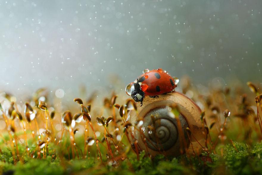 Макрофотографии насекомых от Владимира Трунова. Фото № 2
