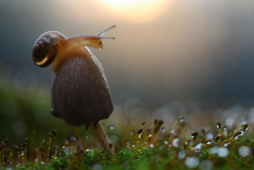 Макрофотографии насекомых от Владимира Трунова. Фото № 20