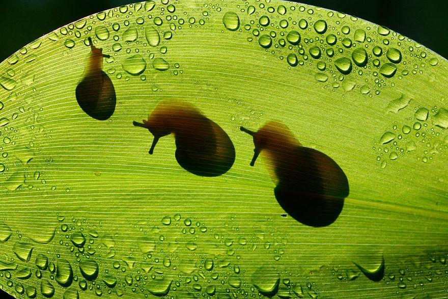 Макрофотографии насекомых от Владимира Трунова. Фото № 21