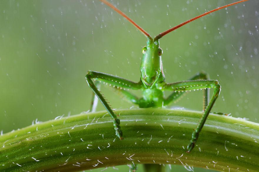 Макрофотографии насекомых от Владимира Трунова. Фото № 23