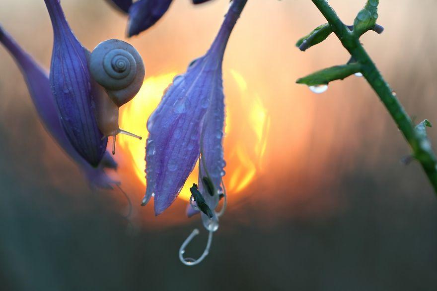 Макрофотографии насекомых от Владимира Трунова. Фото № 25