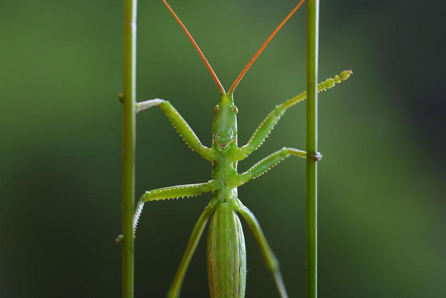 Макрофотографии насекомых от Владимира Трунова. Фото № 3