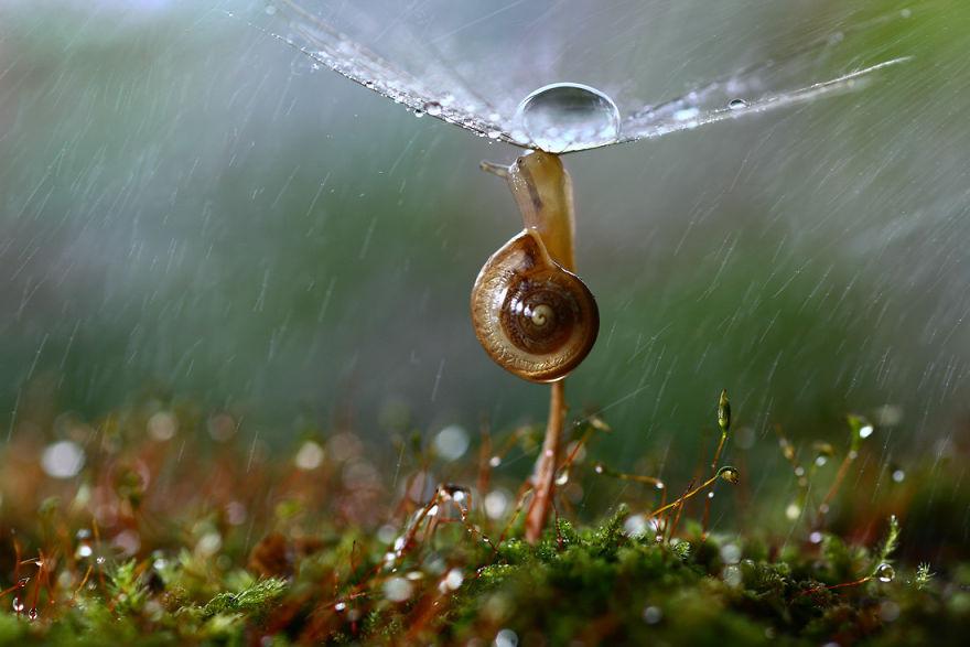 Макрофотографии насекомых от Владимира Трунова. Фото № 6