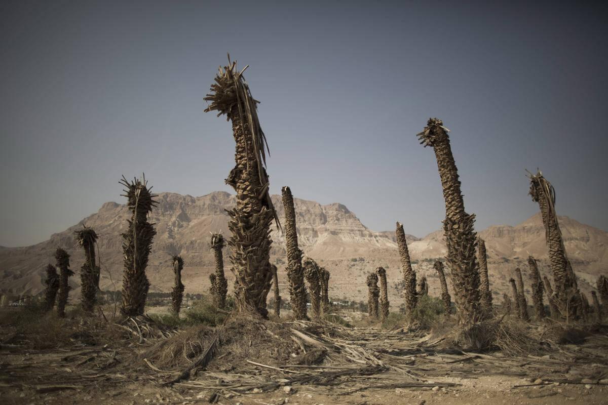 Мертвое море. Израиль. Фото № 10