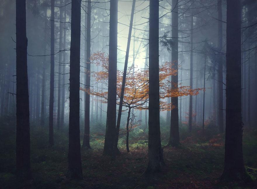 Пейзажи в стиле сказок братьев Гримм. Фото № 13