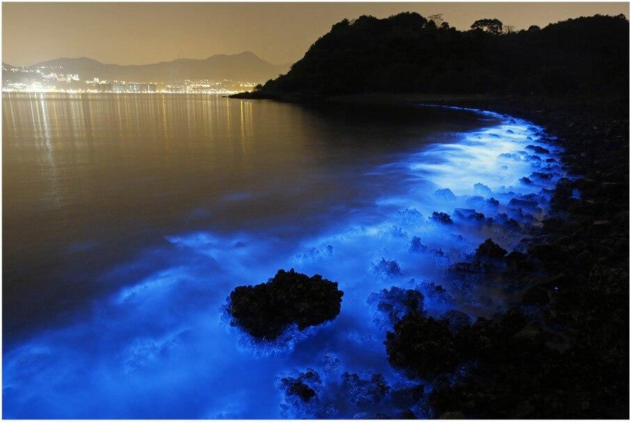 Светящиеся водоросли у берегов Гонконга. Фото № 1