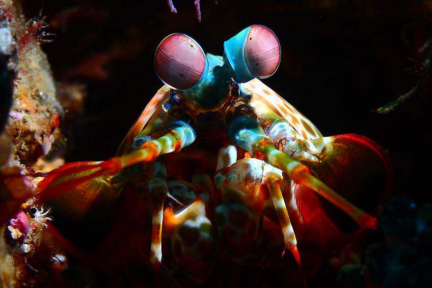Удивительные существа. Подводный мир побережья Индонезии. Фото № 1