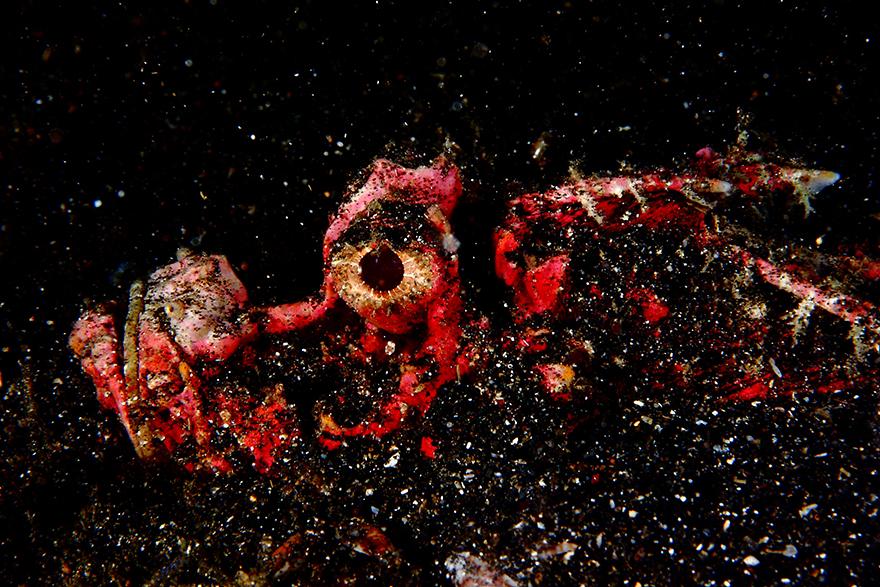 Удивительные существа. Подводный мир побережья Индонезии. Фото № 12