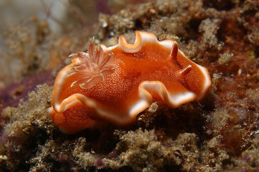 Удивительные существа. Подводный мир побережья Индонезии. Фото № 15