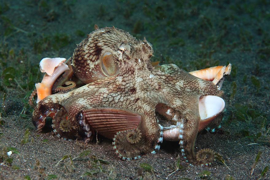 Удивительные существа. Подводный мир побережья Индонезии. Фото № 26