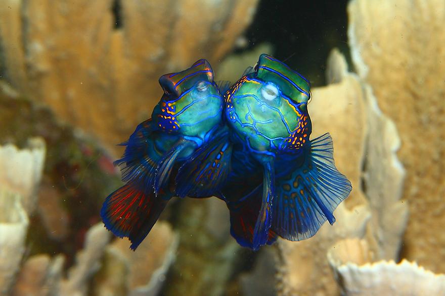 Удивительные существа. Подводный мир побережья Индонезии. Фото № 6