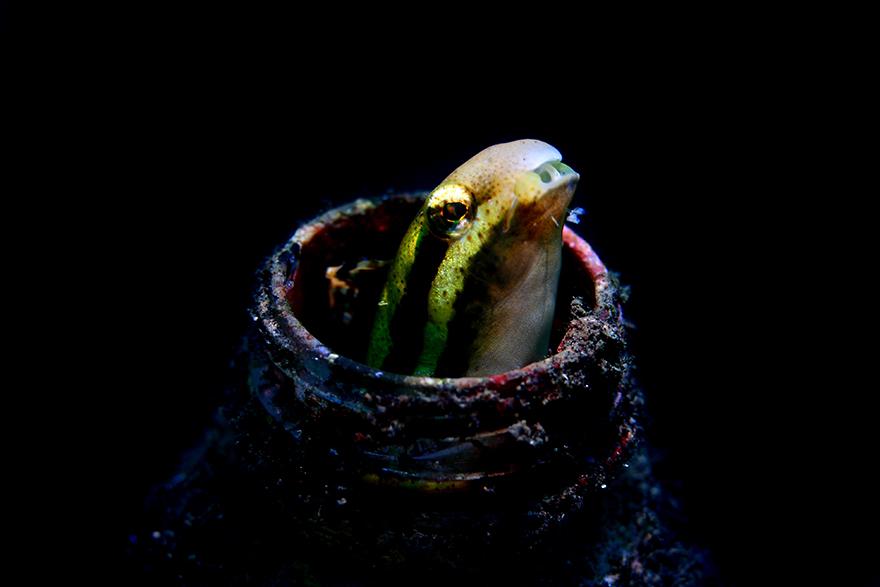 Удивительные существа. Подводный мир побережья Индонезии. Фото № 9