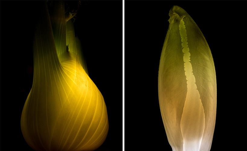 Фото фруктов и овощей. Фото № 15
