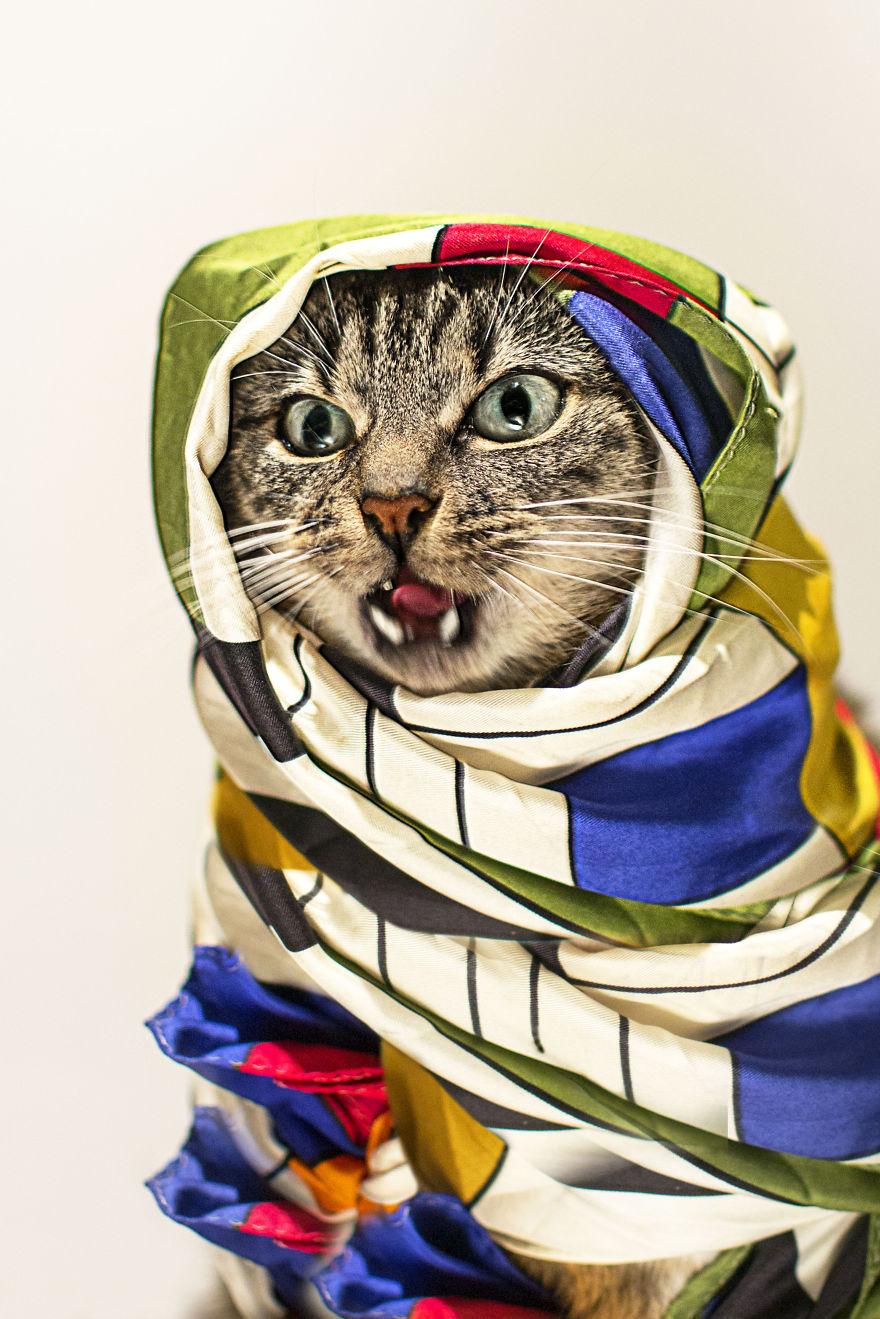 кот больной лейкемией