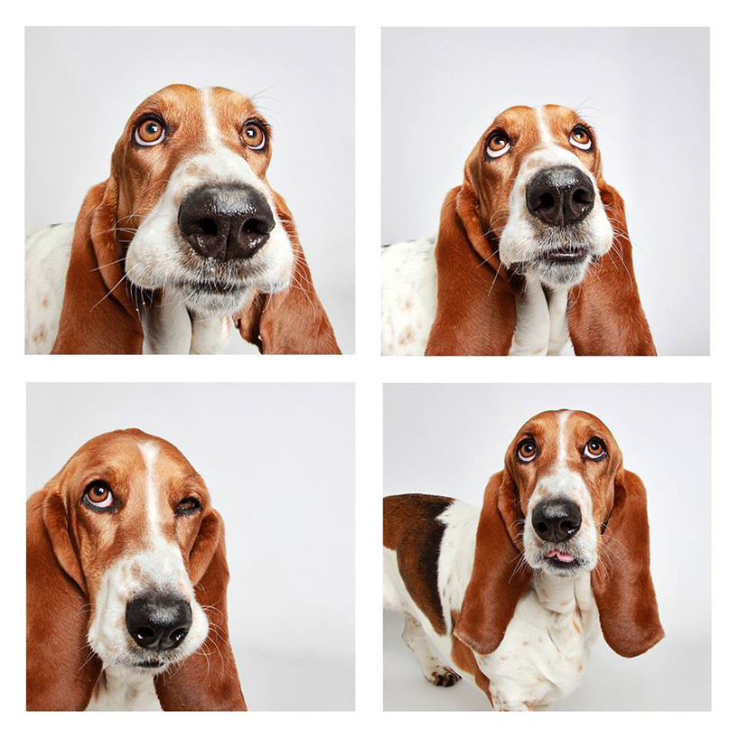 Смешные фотографии собак. Фото № 1