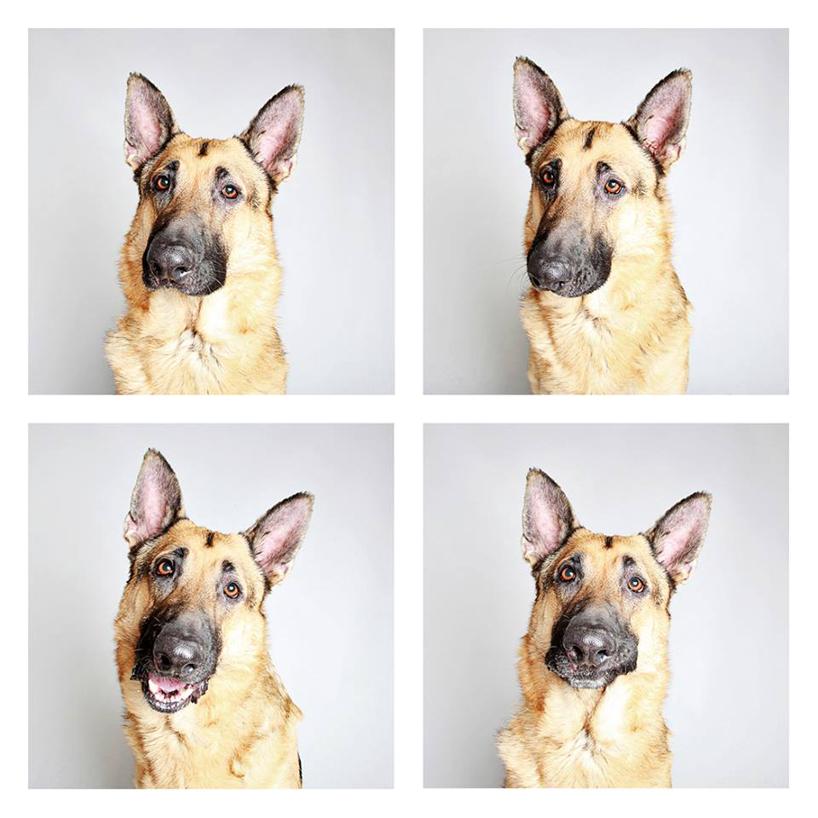 Смешные фотографии собак. Фото № 10