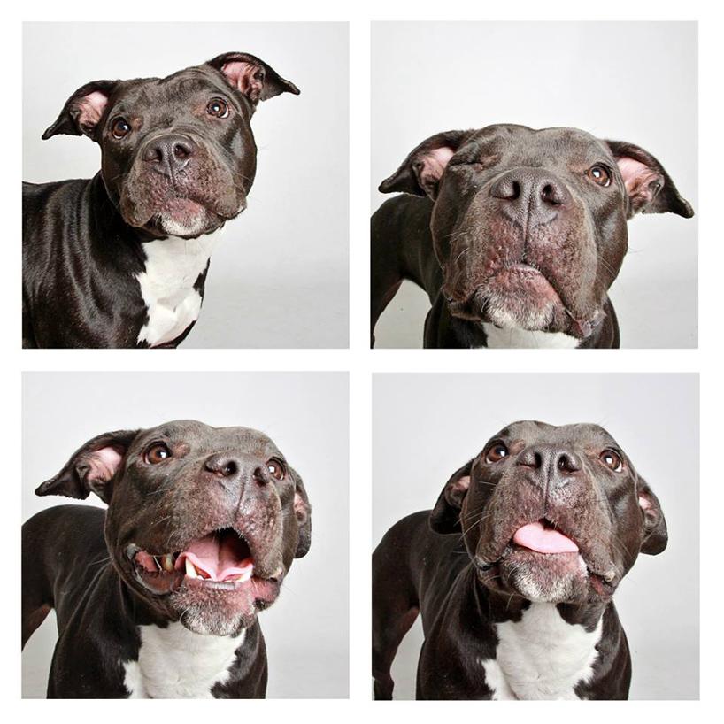 Смешные фотографии собак. Фото № 12
