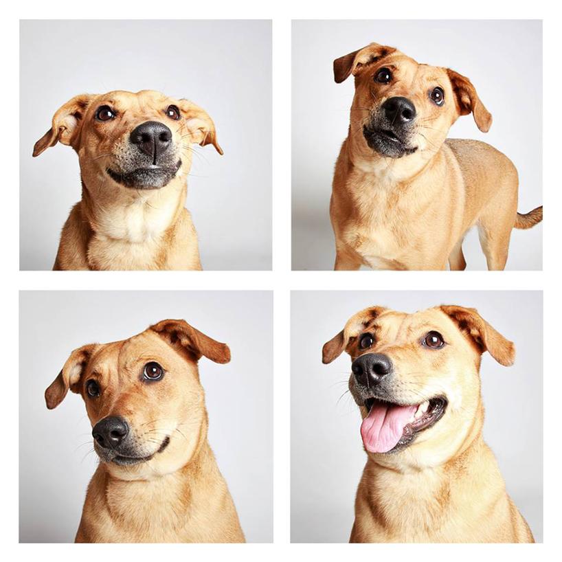 Смешные фотографии собак. Фото № 13