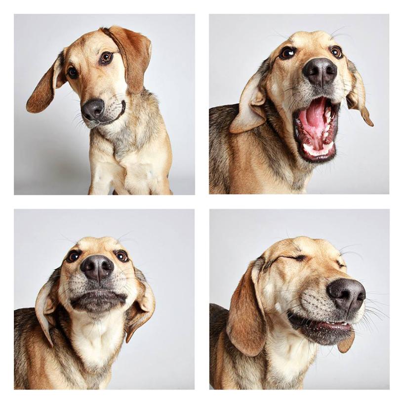 Смешные фотографии собак. Фото № 14